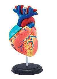 זה לב